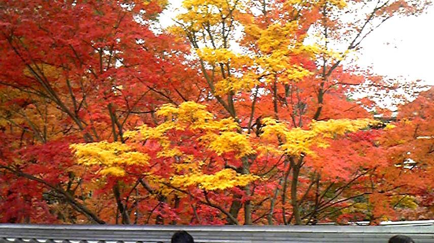 京都の紅葉①.jpg