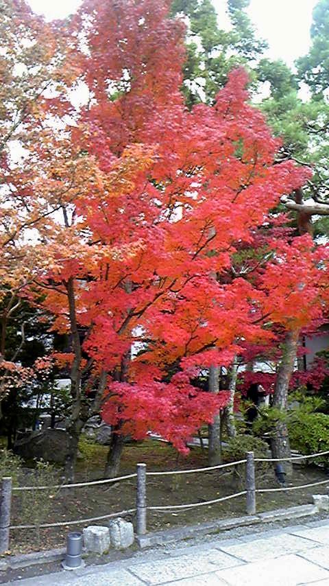 京都の紅葉②.jpg